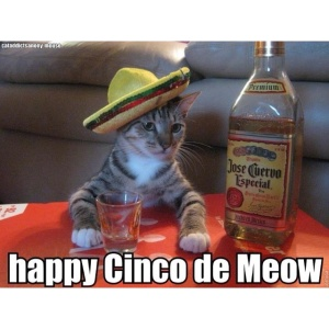 cinco cat
